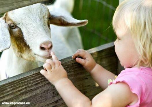 La leche de cabra llega a la alimentación infantil